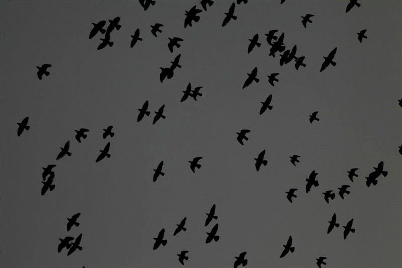 对影——画家视角中的摄影丨AMNUA展讯,丨AMNUA,展讯,南京艺术学院美术馆,周一清,杨冬白,宣文陵,刘婷,薛若哲,温一沛,AMNUA