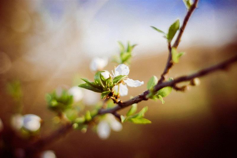 绮丝魅彩,系起你的春夏艺术气息,气息,绮丝魅彩,春夏,歌剧,丝巾,假面舞会,花艺,威尔第,假面,风情