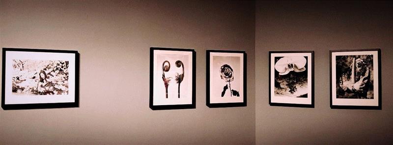 《荒木经惟·花幽》展览现场,荒木经惟·花幽 现场身体表演:凝视的形状 AMNUA身体剧场,荒木经惟,花幽,AMNUA,舞蹈,舞者,艺术节,编舞,俞亚男,罗月冰,现代舞