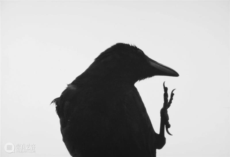 """【转载】林叶丨摄影、时代与个体存在:回望日本""""写真黄金一代"""" 写真 日本 时代 黄金一代 个体 林叶丨 林叶 三影堂摄影艺术中心 黄金 一代 崇真艺客"""