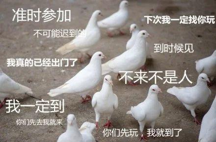 这次来广东,它俩瑟瑟发抖 视频资讯 广州大剧院 广东 动物 社会性 年龄 压力 广州 鸽子 ssfd 而今 社交 崇真艺客