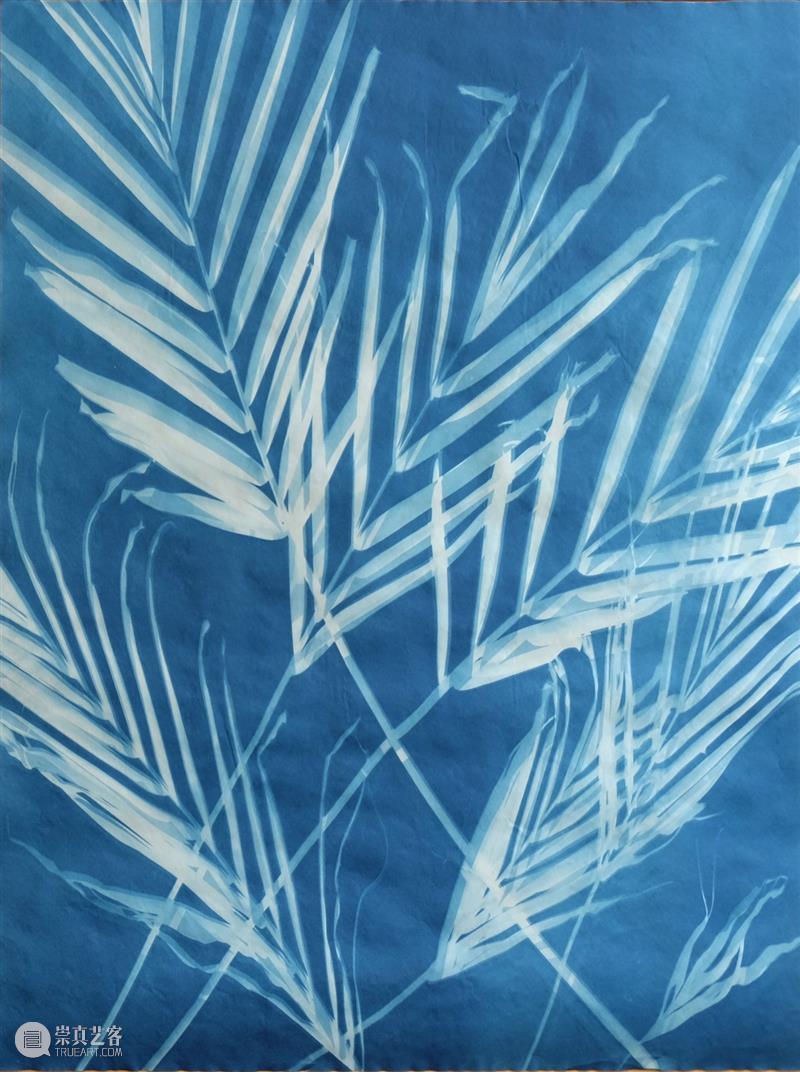 推入近景 | 汤姆·费尔斯:锚定一种充满动感与形式的回味  Xiaohui 汤姆 费尔斯 近景 动感 形式 Tom Fels 花园 树影 图片 崇真艺客