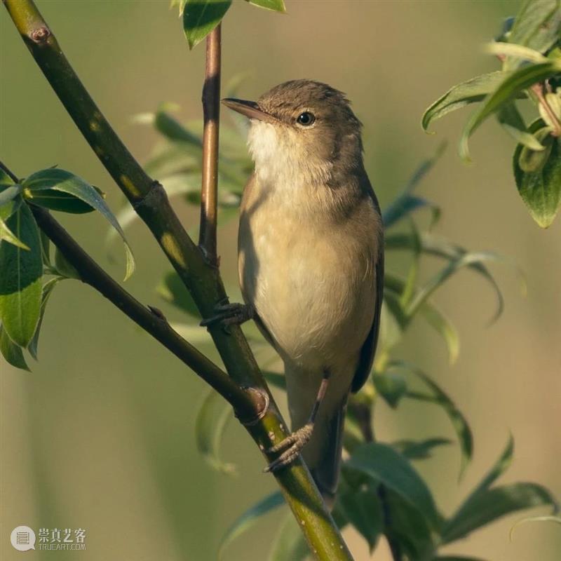 【鸟类摄影】想要拍出这样的照片,需要实力加运气,不简单 鸟类 照片 实力 运气 END 崇真艺客