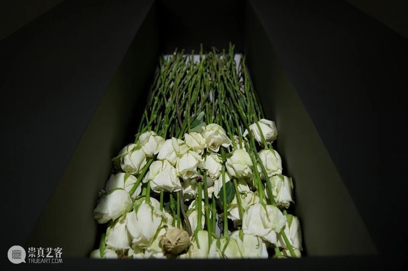 以花之名 | 孙月:用瓷土和植物,让时间可视 孙月 时间 植物 瓷土 视频 明珠美术馆 蒲公英 四方 生命 艺术家希沙姆 崇真艺客