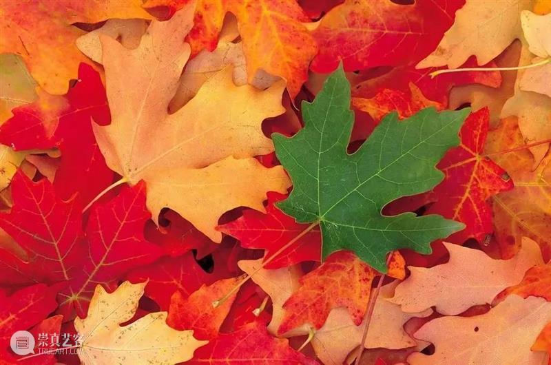 只有一片树叶,怎么才能拍出整个秋天的感觉? 感觉 代表性 事物 过程 生命 生如夏花 秋叶 树叶 秋风 声音 崇真艺客