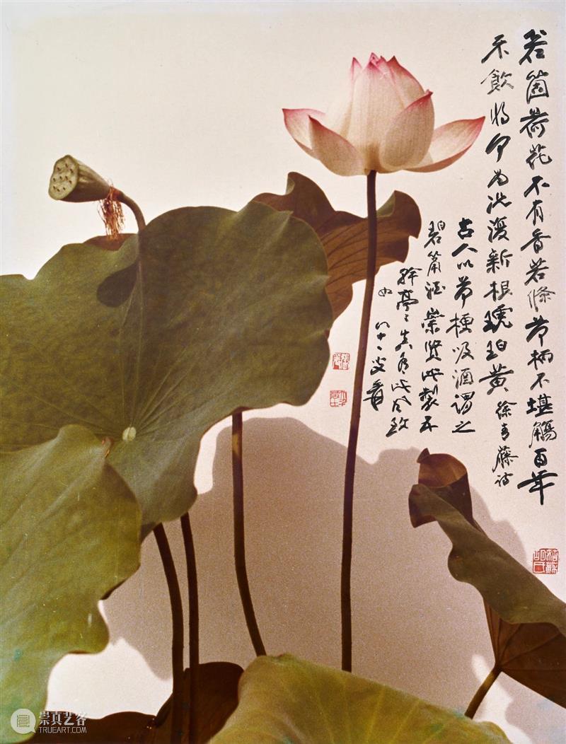 yuznews   新展预告『摩耶精舍:張大千的園林』 摩耶精舍 張大千 園林 yuznews 讀懂 傳奇攝影師與 藝術 創舉 图片 余德耀 崇真艺客