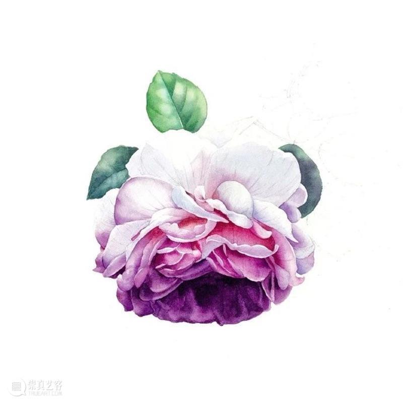 教你如何快速掌握水彩写实花卉 水彩 花卉 思路 方法 题材 步骤 查尔斯达尔文 月季花 深红色 欧月 崇真艺客