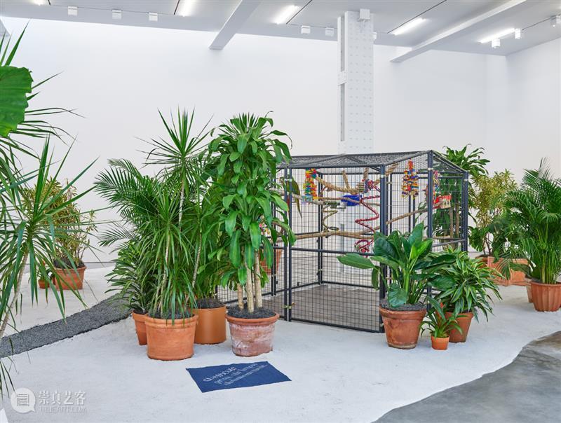 里森纽约 | 何里欧·奥迪塞卡 (Hélio Oiticica) 正在展出 Hélio Oiticica 何里欧 奥迪 纽约 Tropicália Purity Imagetical Wood mesh 崇真艺客