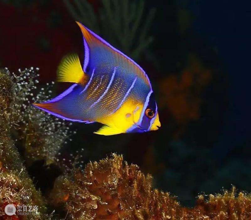 最罕见的鸟、最美的鱼 崇真艺客