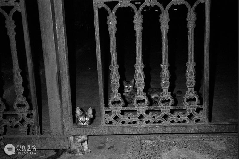 M50展览   「救猫咯!那狗呢?」艺术品义卖展   睿品画廊 艺术品 睿品 画廊 义卖展 海报 寒潮 大地 上海 零下 流浪猫 崇真艺客