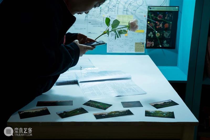 """植物生命与时间回忆交织,""""以花之名""""蔓延生长 植物 生命 时间 作品 陈丹燕 律令 明珠美术馆 现场 刘真辰 系列 崇真艺客"""