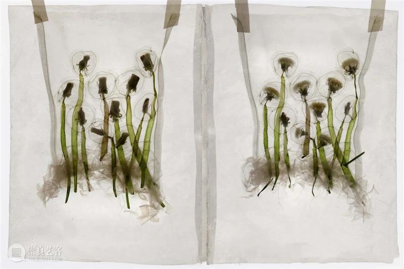 【IFA-艺术赏析】Beatrice Oettinger|把种子和花瓣种在身上 Oettinger 种子 艺术 花瓣 IFA 身上 德国 材料 设计师 纺织 崇真艺客