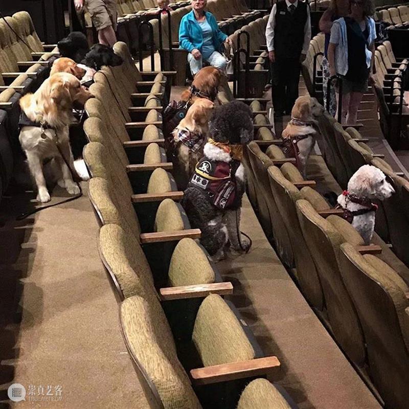 """走进剧场的权利,属于每一个""""你"""" 剧场 权利 导盲犬 主人 戏剧 人群 艺术 从业者 愿望 责任 崇真艺客"""