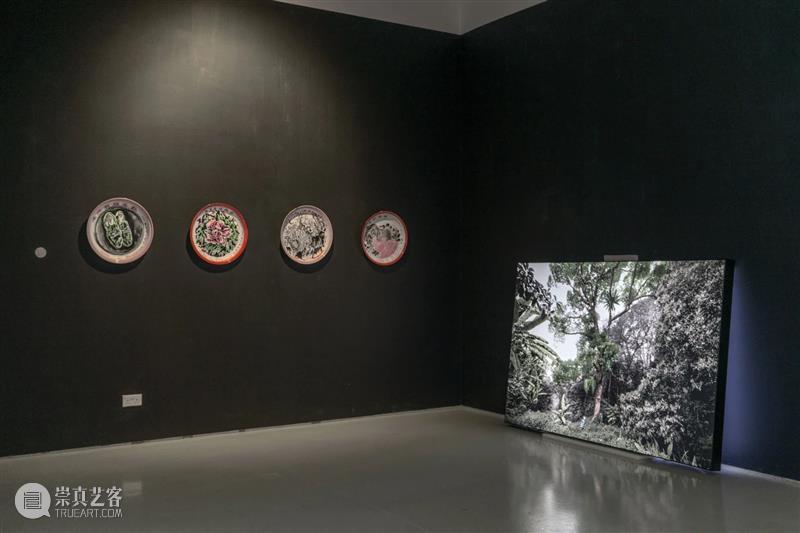 香格纳画廊 | 2020年度展览回顾(上) 香格纳画廊 艺术家 本馆 国内外 艺术 空间 其中 作品 新生 新作 崇真艺客