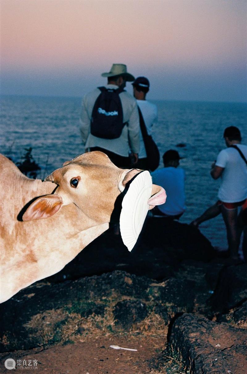 "SCôP Moments | 摄影作品中的""牛"" 作品 Moments 人类 历史 西方 文化 财富 力量 象征 中国 崇真艺客"