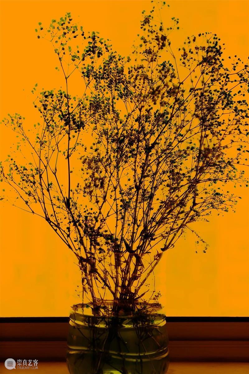 展览预告   胡介鸣:格物·2020 胡介鸣 格物 Jieming格物 系列 紫色 No.28摄影 The Things 时间 Dates 崇真艺客