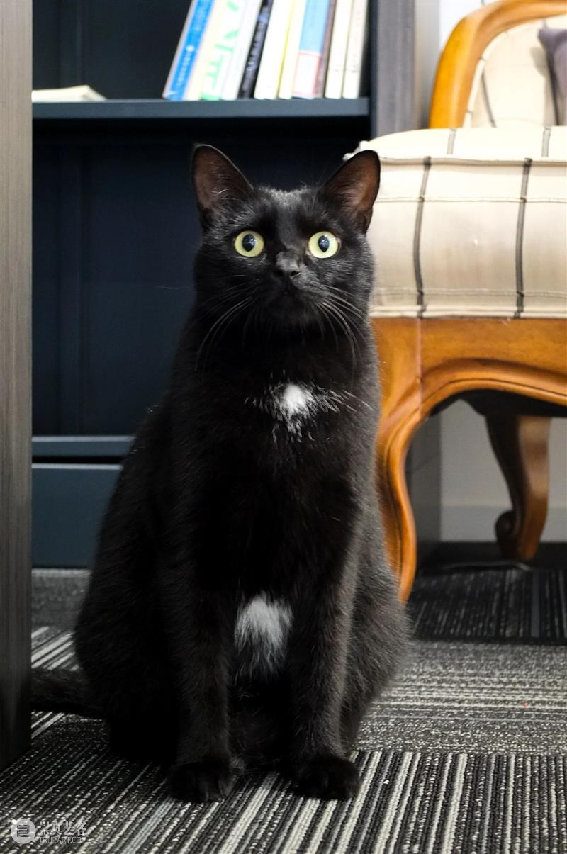 一个美术馆的基本素养:有猫大家吸! 美术馆 素养 伙伴 一只猫 以上 海明威 喵星人 上海民生现代美术馆 合家 日子 崇真艺客