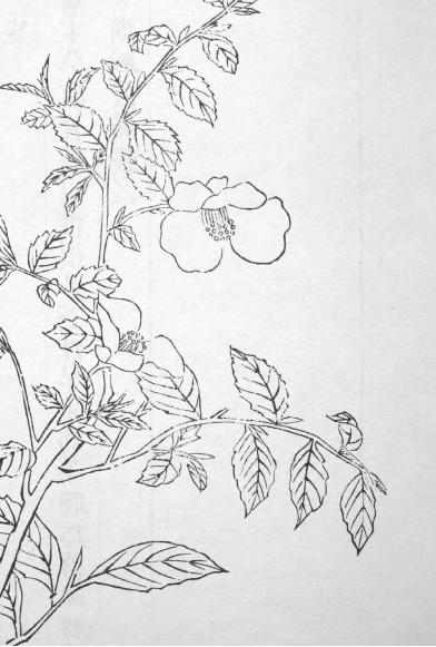 """陆羽写本玩茶的书,怎么会好意思叫""""茶经""""呢? 陆羽 茶经 意思 过去 之外 东西 史学家 章学诚 文史通义 意义 崇真艺客"""