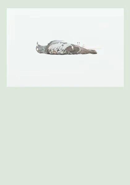 """泛东南亚三年展延伸研究   赵仁辉:""""当世界碰撞""""(2017-2018)与批判性动物学家研究所 崇真艺客"""