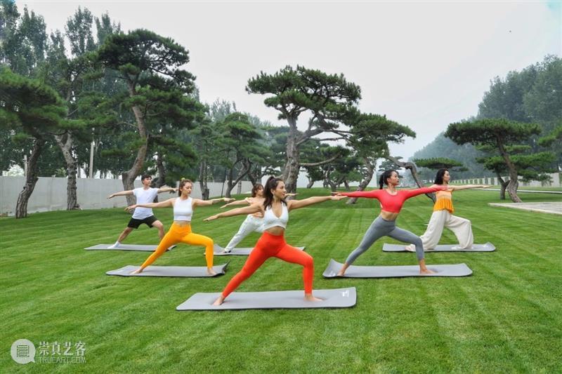 周末,来一场畅快的松间瑜伽吧! 瑜伽 周末 松间 生机 生活 炎炎 何以解忧 自然 艺术 身体 崇真艺客