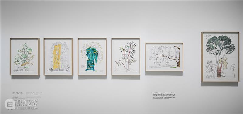 看「树,树」的时候,我们在看什么 热点聚焦  上海当代艺术博物馆 卡地亚当代艺术基金会 树,树 崇真艺客