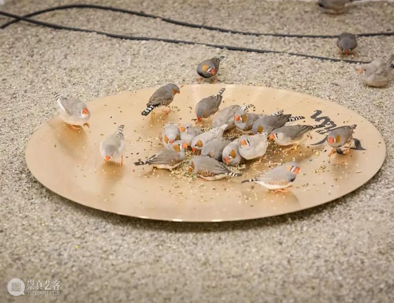 从泥土到语言 | 塞莱斯特·布谢-穆日诺:以瓷奏乐 泥土 语言 塞莱斯特·布谢 穆日诺 陶瓷 媒介 纪录片 上海明珠美术馆策划举办 方式 材料 崇真艺客