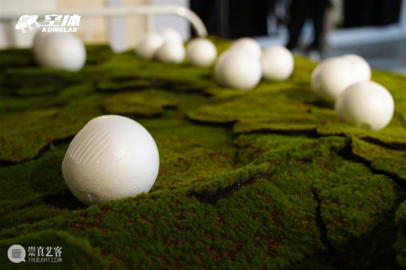 【园区空间】空体展览「光合作用」开幕回顾:探寻城市人类与自然的距离 自然 空间 光合作用 空体 人类 园区 城市 距离 绿色 自然博物馆 崇真艺客