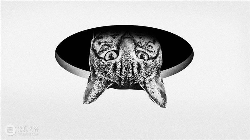 我花了5个月,想要把天花板上的猫哄下来 天花板 Atlantic利维坦 之后 嘴边 一句话 神经病 脸上 表情 海豚 笑脸 崇真艺客