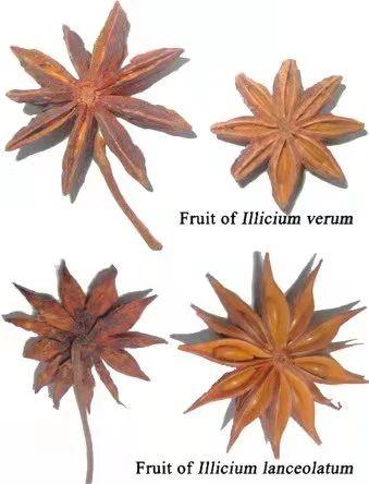 黄花花,红果果,吃完也会躺板板 板板 黄花 红果果 植物 白杆杆 图书 脑子 旋律 许多 菌类 崇真艺客