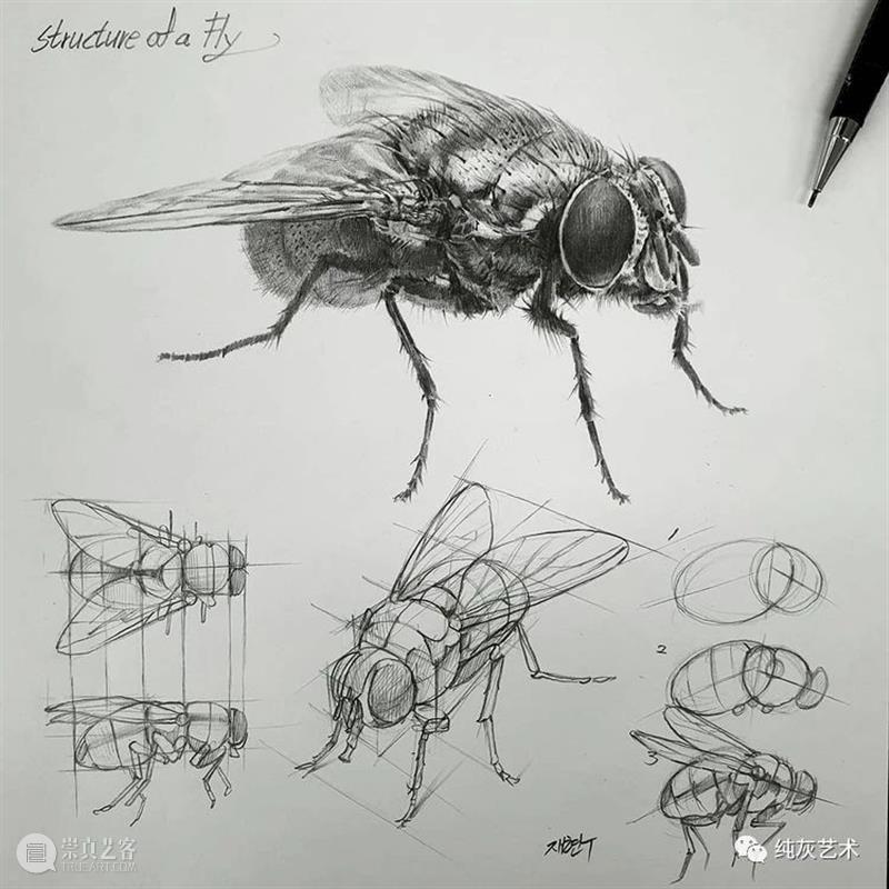 这样拆解画动物素描 素描 动物 韩国 艺术家 美术 老师 anjjaemi 作品 一幅画 结构 崇真艺客