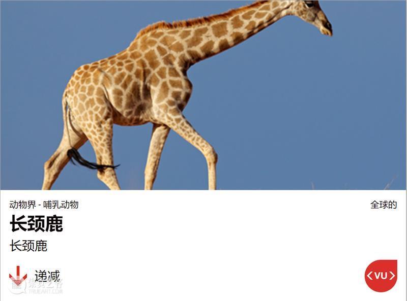 红色警报!更新的濒危物种红色名录,传递了什么信息? 物种 红色 名录 信息 警报 动物 长颈鹿 视觉中国 联合国 生物 崇真艺客