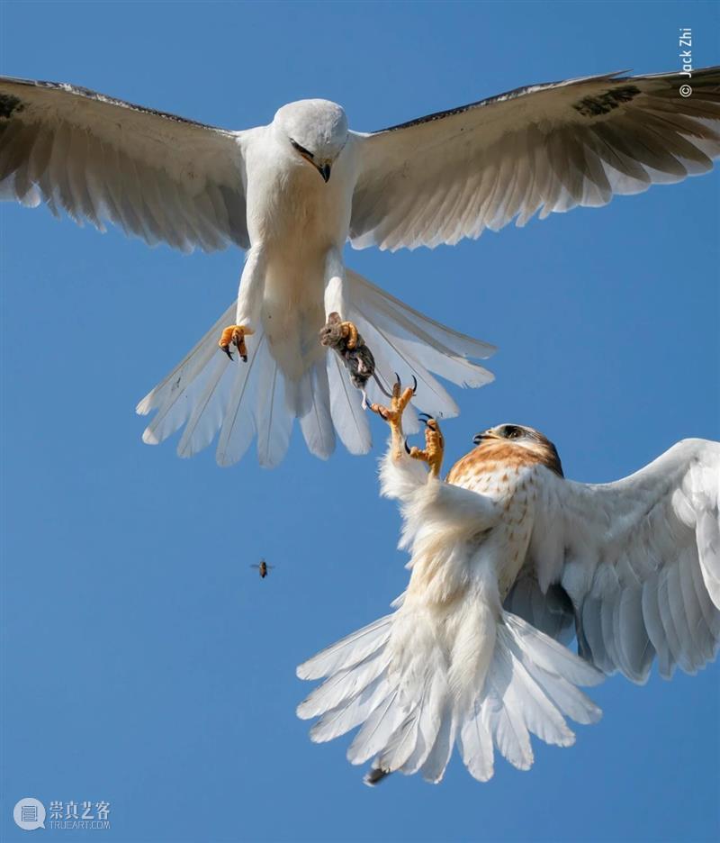 Newsstand224|多主题野生动物摄影,地球上生命多样性的重要性 主题 地球 生命 多样性 重要性 野生动物 经典 创意 商业 文化 崇真艺客