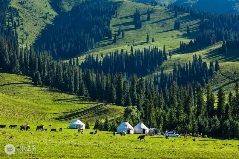 新疆最水灵的地方,为什么是伊犁? 新疆 伊犁 地方 阔克苏大峡谷 鳄鱼湾 风物君语 骏马 秋风 大家庭 家中 崇真艺客