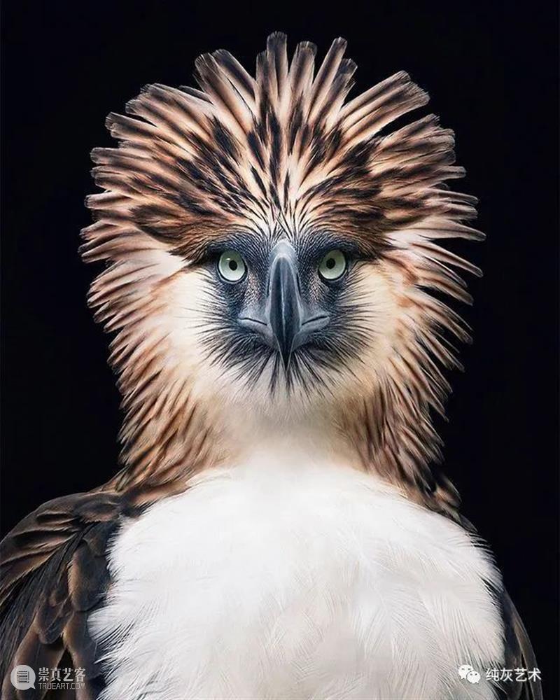 如果动物有证件照 动物 证件照 摄影师 Flach 镜头 人物 肖像 方式 脸部 表情 崇真艺客