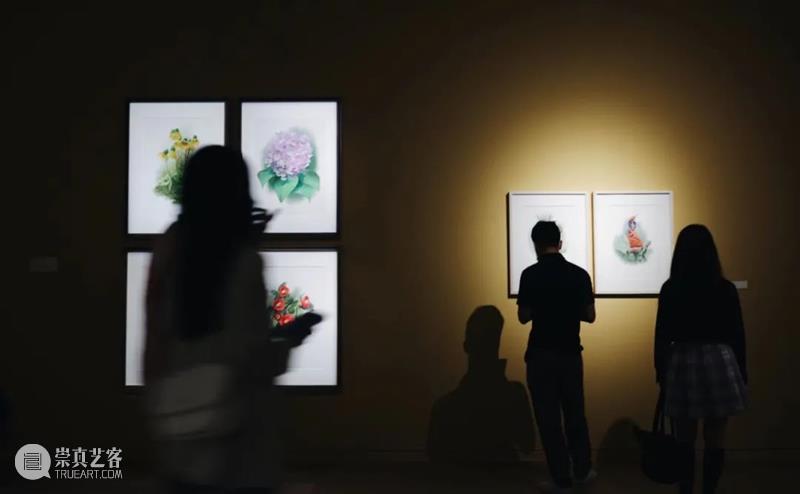 CGK活动   十一国庆节期间进行免费公众导览 期间 公众 导览 活动 CGK 昆明 当代美术馆 计划 导览员 作品 崇真艺客