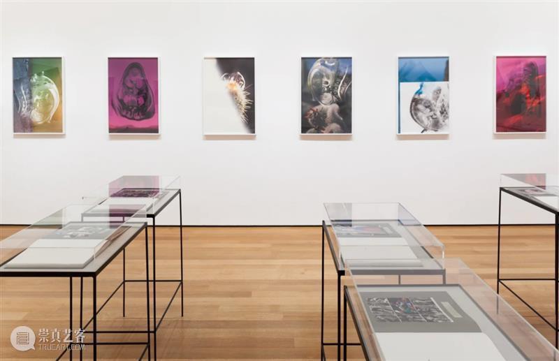 线上展厅|约瑟芬·普赖德 :回应欲望 线上 展厅 约瑟芬 普赖德 欲望 东西 照片 普莱德 MoMA 裸眼 崇真艺客