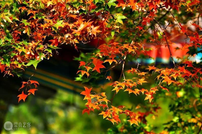 """南北秋色""""内卷""""时,哪座城的秋景最神仙?  中国国家地理BOOK 崇真艺客"""
